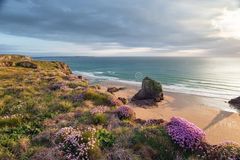 Download De Zomer Op De Kust Van Cornwall Stock Foto - Afbeelding bestaande uit cornish, pinks: 54089492
