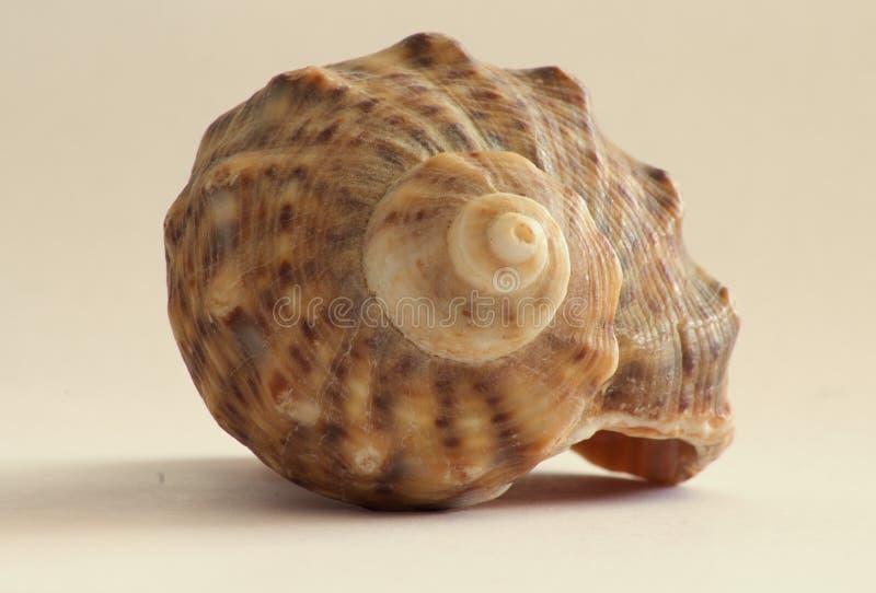 De zomer overzeese shells van het strand van het vakantiewater royalty-vrije stock foto