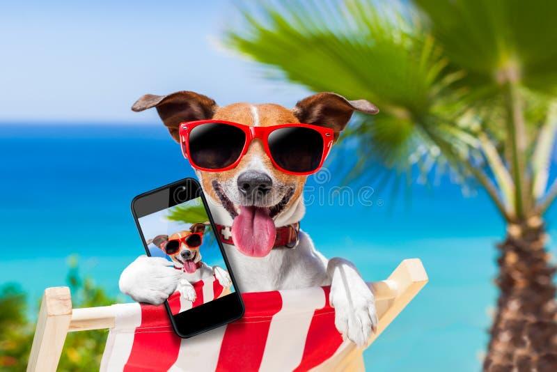 De zomer selfie hond royalty-vrije stock foto