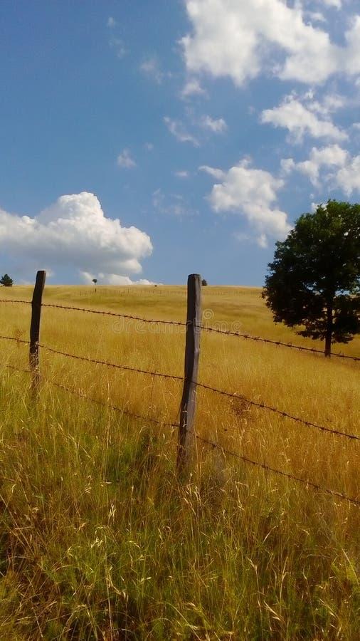 De zomer in Servië stock foto's