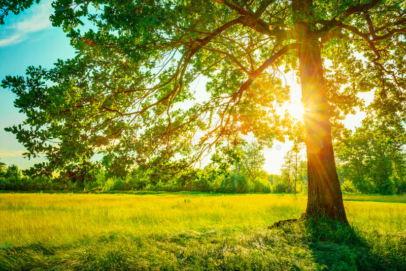 De zomer Sunny Forest Trees And Green Grass nave stock fotografie