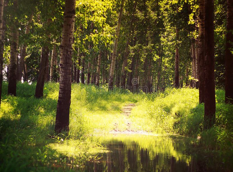 De zomer Sunny Forest Trees And Green Grass nave royalty-vrije stock foto