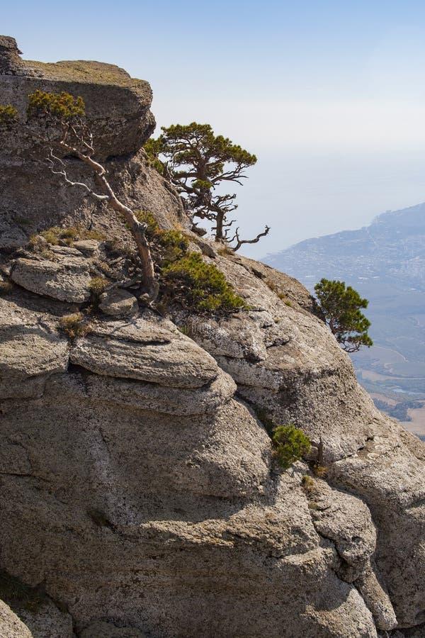 De zomer van de berg Demerji Bomen op de rotsen royalty-vrije stock foto