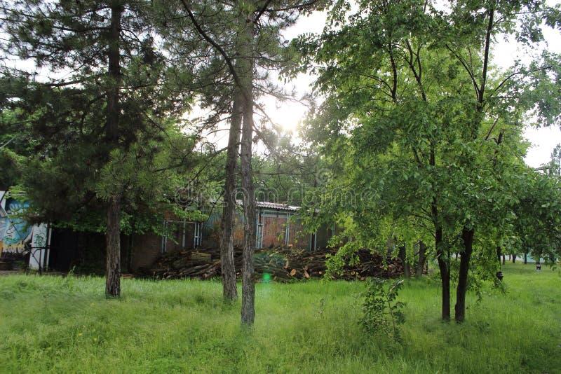 De zomer van de aardlente bloeit de groene boom van het rivier leuke aardige groene park stock afbeeldingen