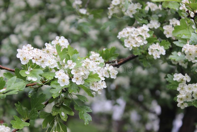 De zomer van de aardlente bloeit groene rivier stock foto