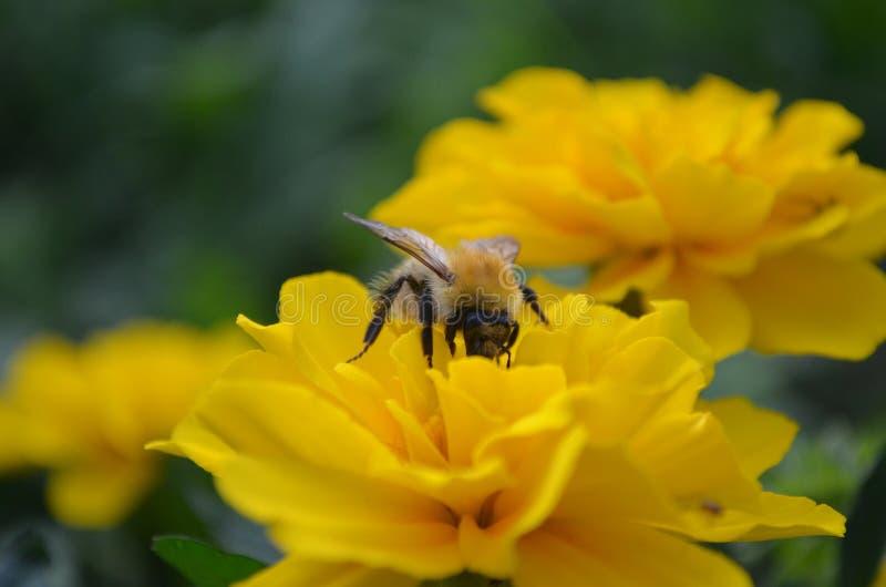 De zomer van de de serrekleur van de bloemenflora stock afbeelding