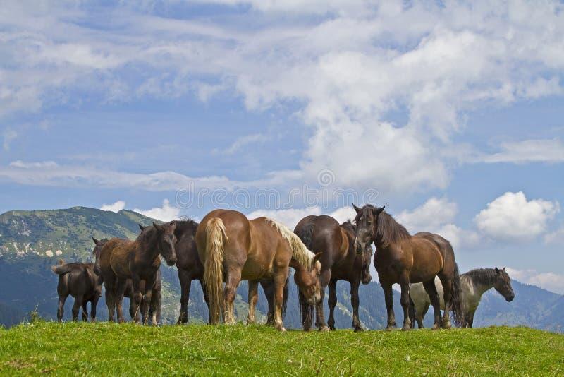De zomer van paarden in de bergen royalty-vrije stock afbeelding