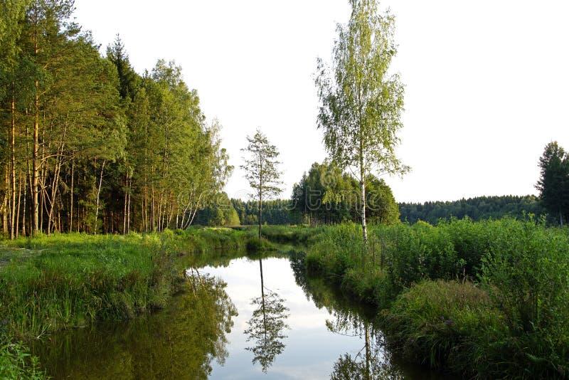 De zomer van de warme zonnige avond van Augustus A op de kust van een bosmeer Bezinning van bomen in de spiegel van water royalty-vrije stock afbeelding