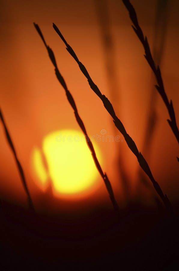 De zomer warme zonsondergang door de stelen van wild gras royalty-vrije stock afbeelding