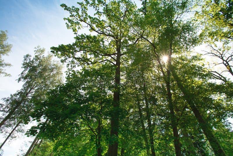 De zomer zonnig bos royalty-vrije stock afbeeldingen