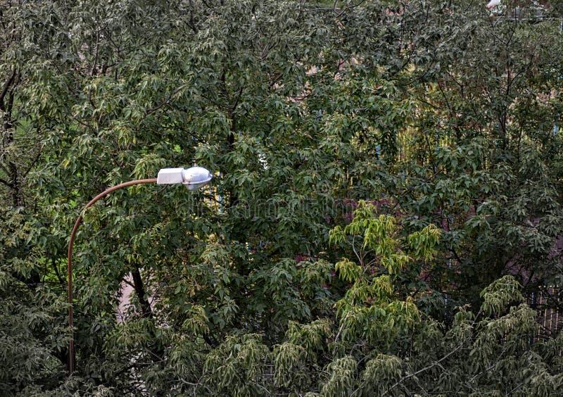 De zomerachtergrond Bladeren, bomen, lamp royalty-vrije stock afbeelding