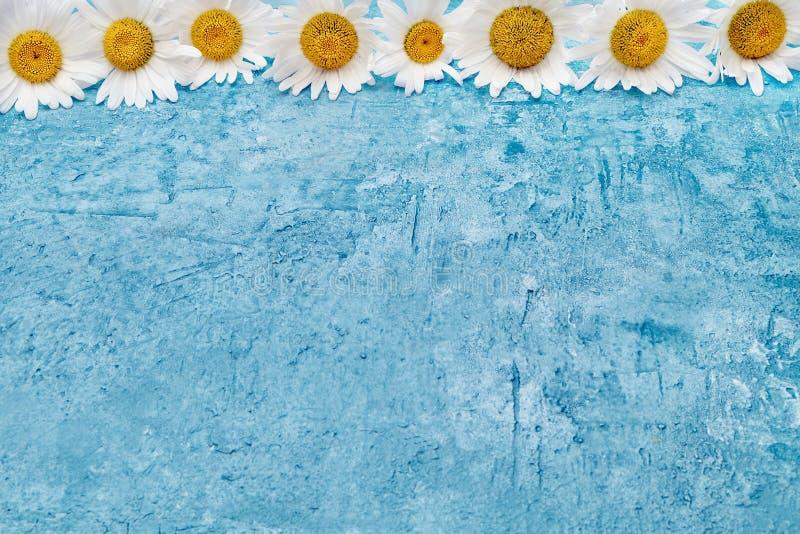 De zomerachtergrond Margrietgrens op blauwe achtergrond Exemplaar s stock afbeeldingen