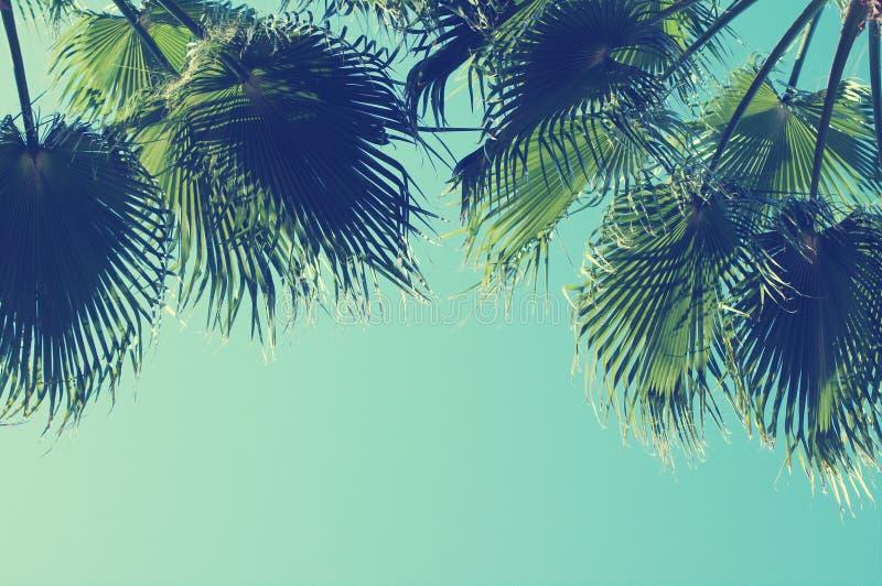 De zomerachtergrond met Palm tegen hemel royalty-vrije stock foto