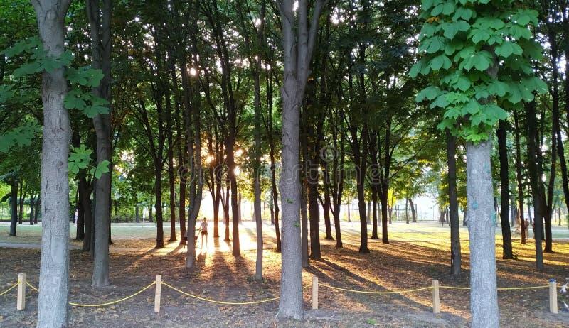 De zomeravond in park stock foto