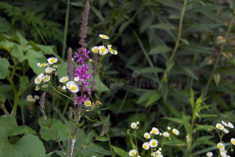 De de zomerbloemen groeien op de rivierbank royalty-vrije stock foto