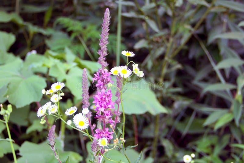 De de zomerbloemen groeien op de rivierbank royalty-vrije stock afbeelding
