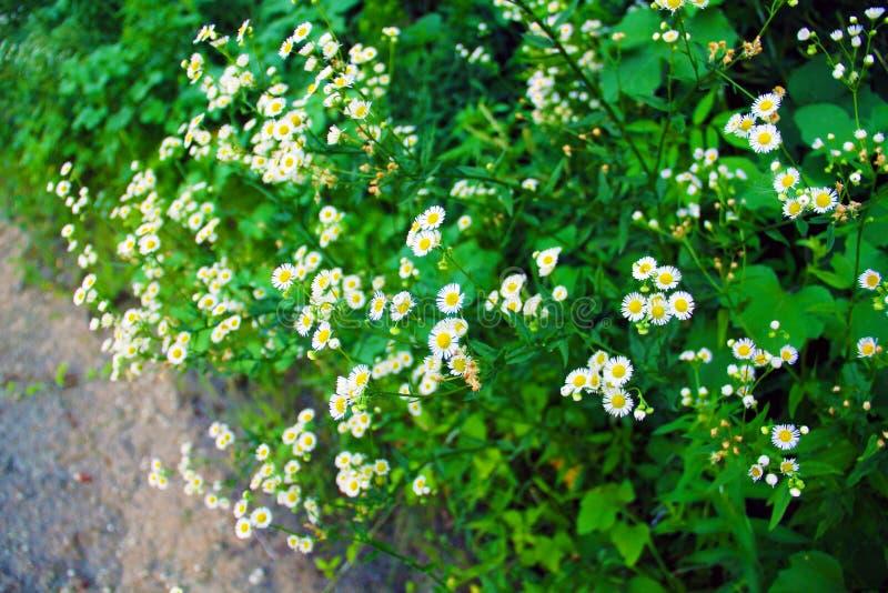 De de zomerbloemen groeien op de rivierbank royalty-vrije stock afbeeldingen