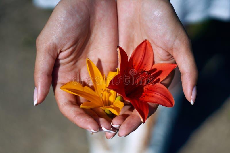 De zomerbloemen in haar handen stock foto's