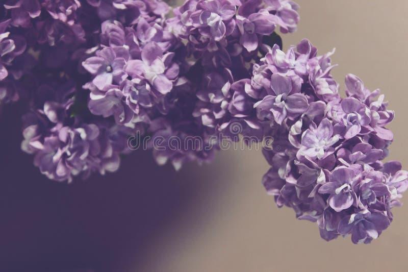 De zomerbloemen van de aardlente royalty-vrije stock fotografie