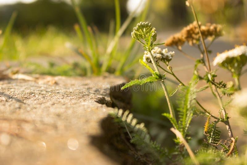 De Zomerbloemen van de gras Groene Kleur stock fotografie