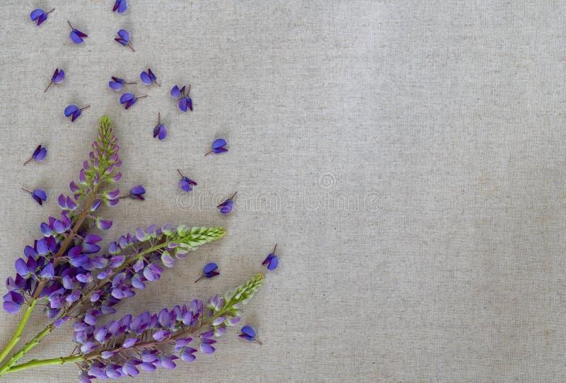 De zomerbloemen van lupine op natuurlijke geweven canvasoppervlakte voor olie stock fotografie