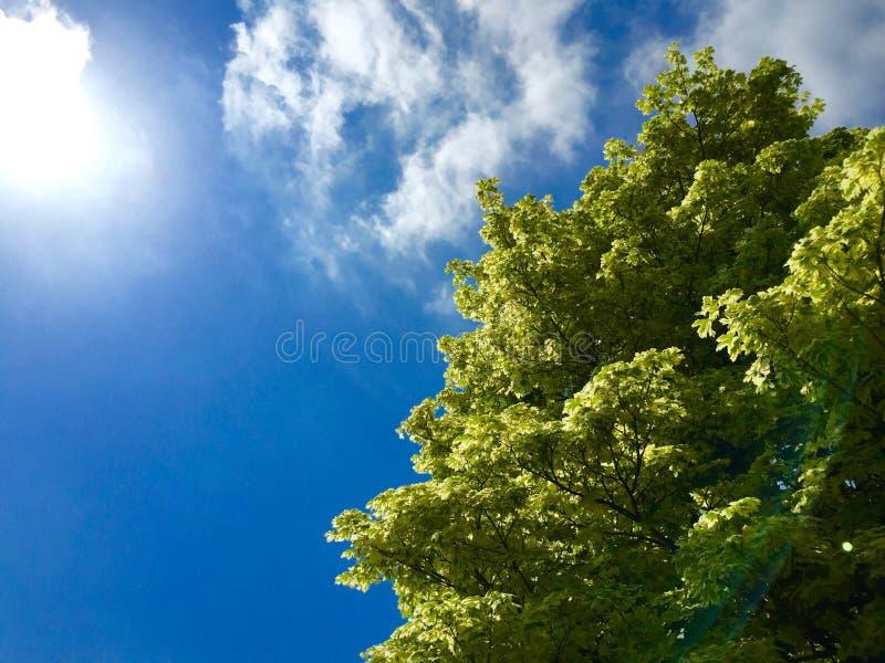 De zomerbomen royalty-vrije stock foto's