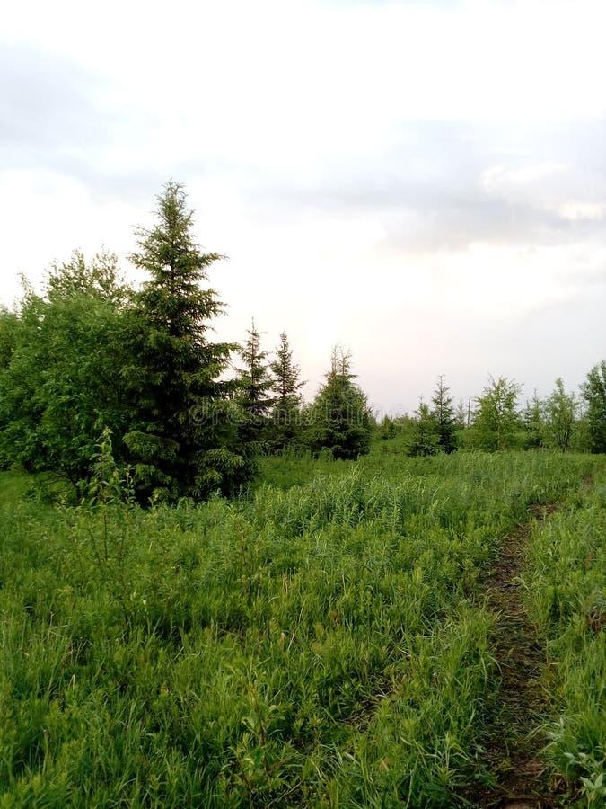 De zomerbos in het geheel van groen en schoonheid stock afbeelding