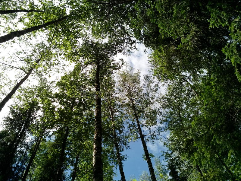 De zomerbos in het geheel van groen en schoonheid royalty-vrije stock afbeelding