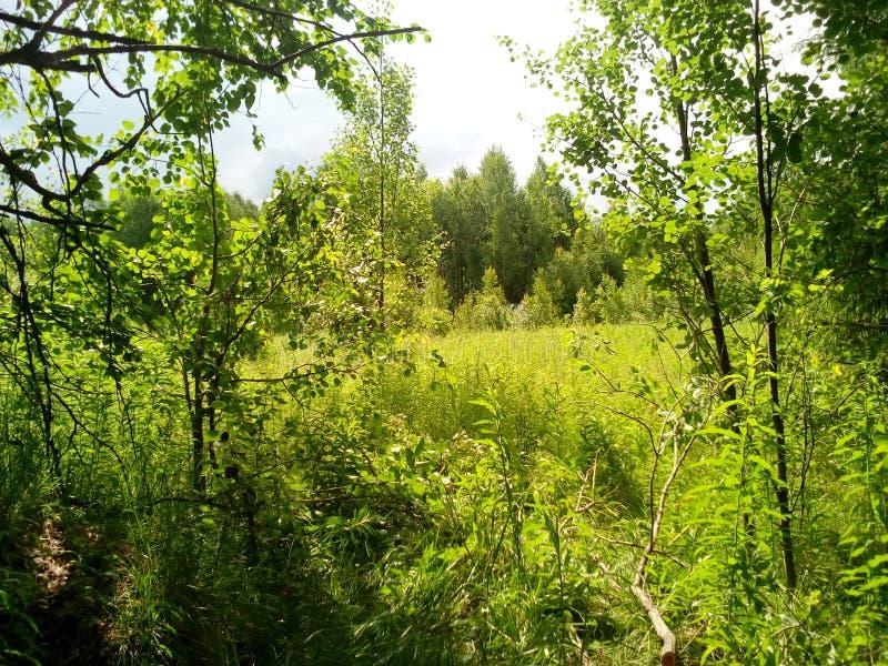 De zomerbos in het geheel van groen en schoonheid royalty-vrije stock foto