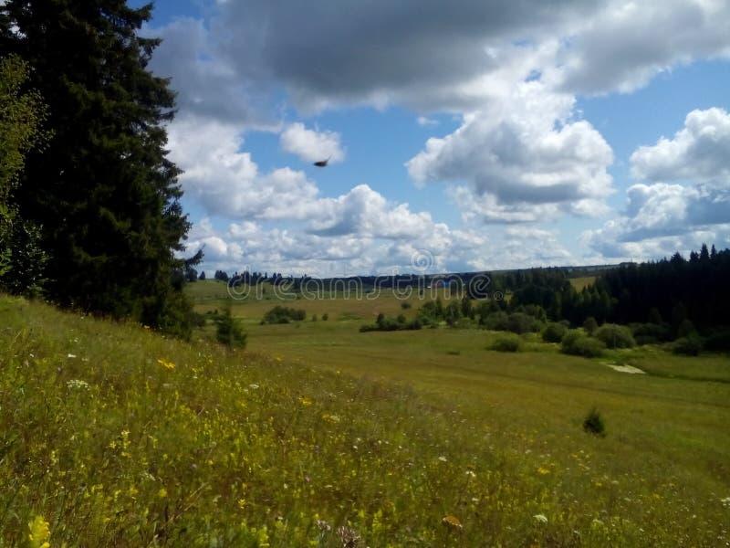 De zomerbos in het geheel van groen en schoonheid royalty-vrije stock afbeeldingen