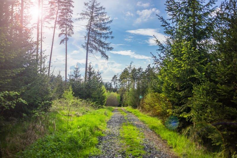 De zomerbos in Tsjechische Republiek royalty-vrije stock afbeelding