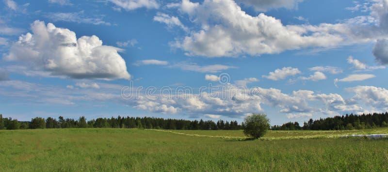 De zomerdag in Norrbotten royalty-vrije stock fotografie