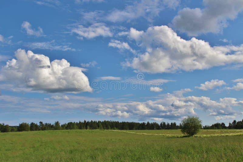 De zomerdag in Norrbotten stock foto