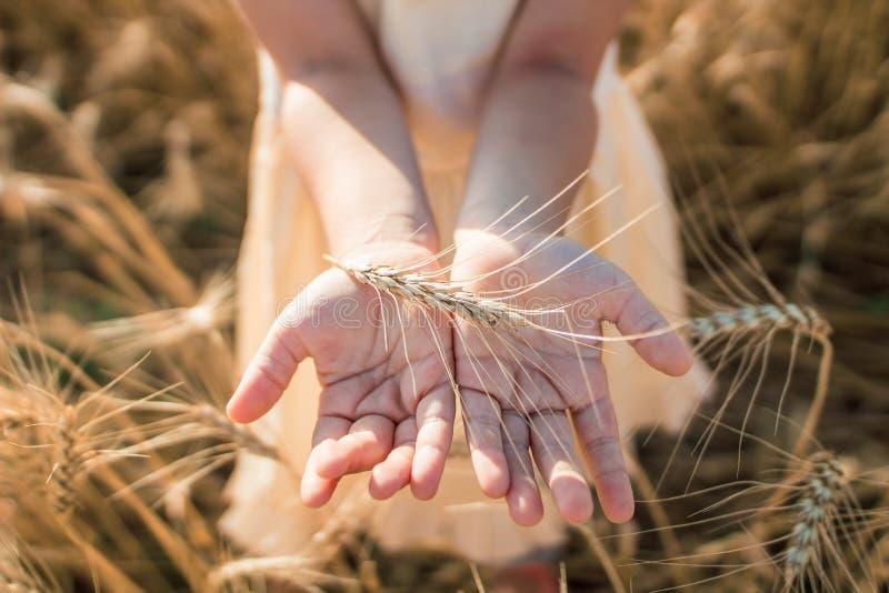 De zomerfoto Foto van een tarwegebied meisje en tarwe stock foto