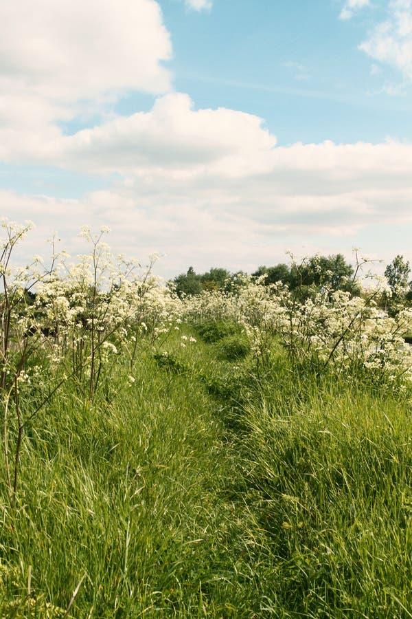 De zomergebied met weg en bloemen stock afbeeldingen