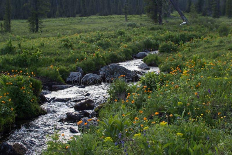De zomerkreek, bloemen, het wild, mooie mening royalty-vrije stock foto