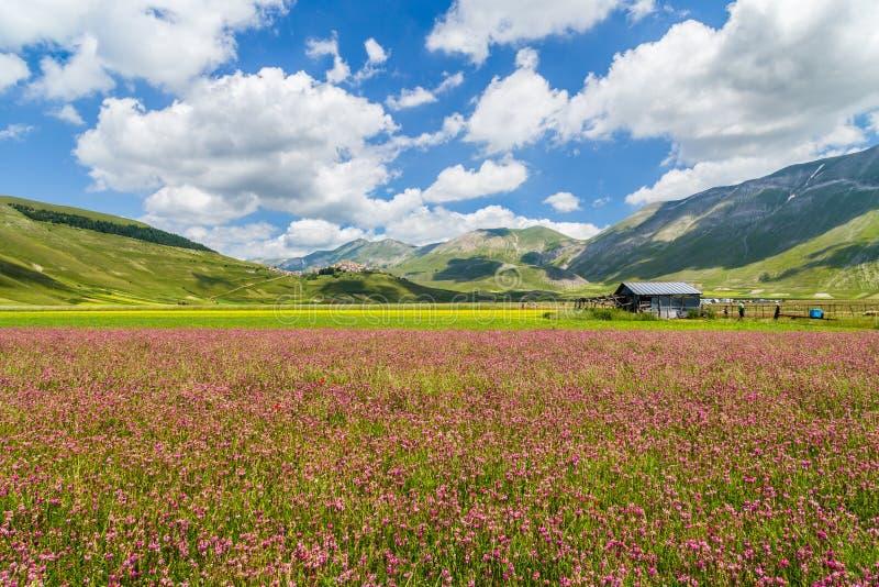 De zomerlandschap bij de bergplateau van Pianogrande, Umbrië, Italië stock afbeeldingen