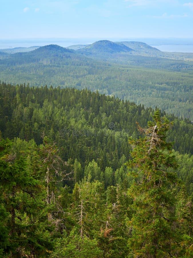 De zomerlandschap bij het Koli National-Park in Finland royalty-vrije stock foto