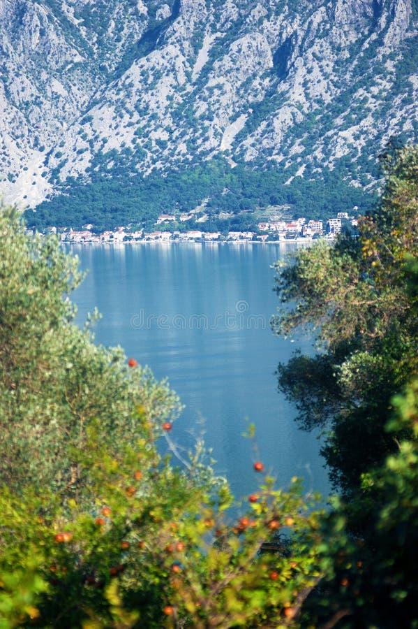 De zomerlandschap dichtbij het Adriatische Overzees royalty-vrije stock foto