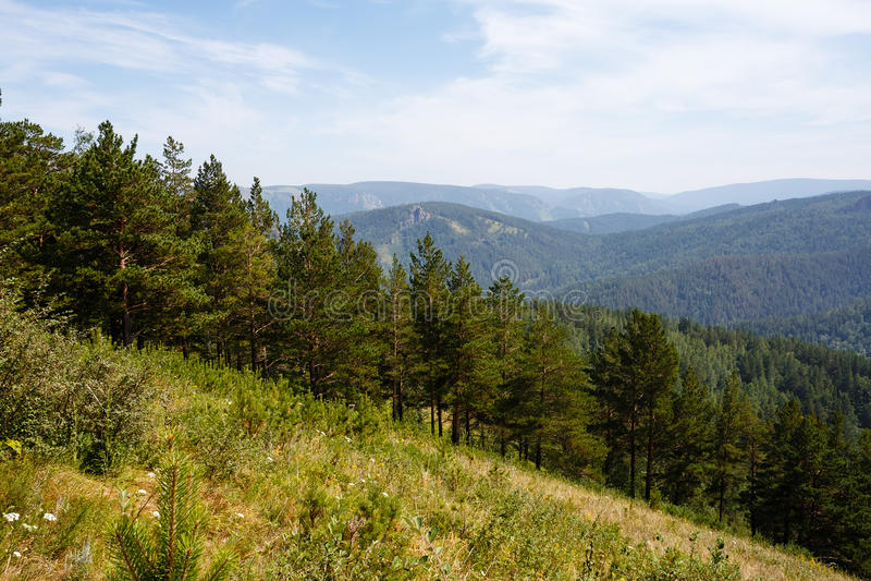 De zomerlandschap het hout, bergen in Rusland royalty-vrije stock fotografie