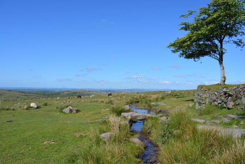 De zomerlandschap in het Nationale Park van Dartmoor, Engeland royalty-vrije stock foto's