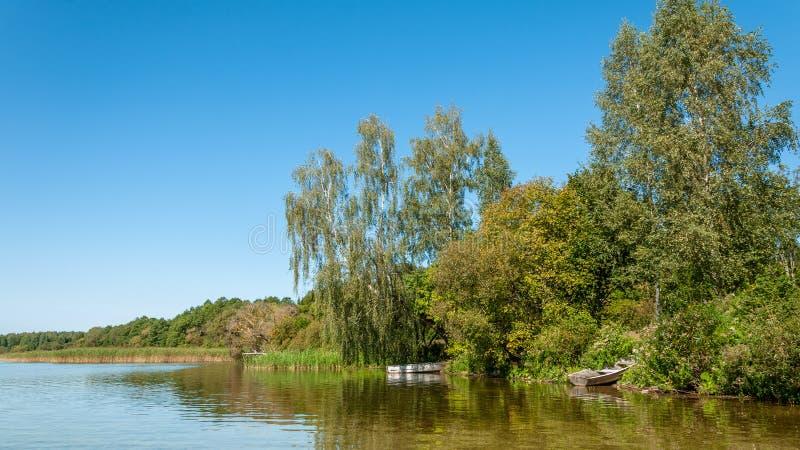 De ZOMERlandschap kust van het meer met bomen, struiken en riet onder een duidelijke blauwe hemel royalty-vrije stock fotografie