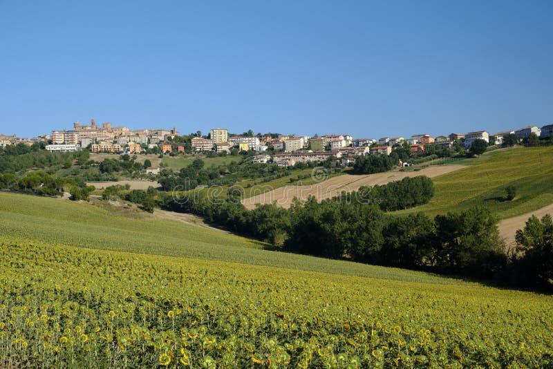 De zomerlandschap in Marsen Italië dichtbij Filottrano royalty-vrije stock afbeelding