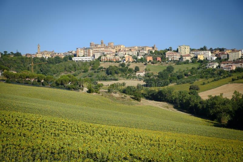 De zomerlandschap in Marsen Italië dichtbij Filottrano royalty-vrije stock foto's