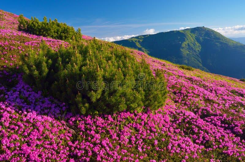De zomerlandschap met bloemen stock afbeeldingen