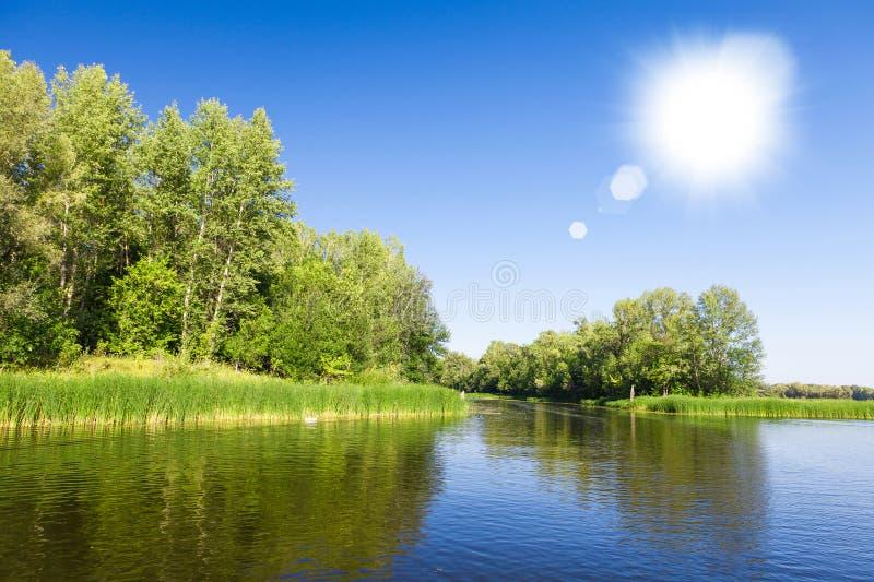 De zomerlandschap met bos en meer stock afbeelding