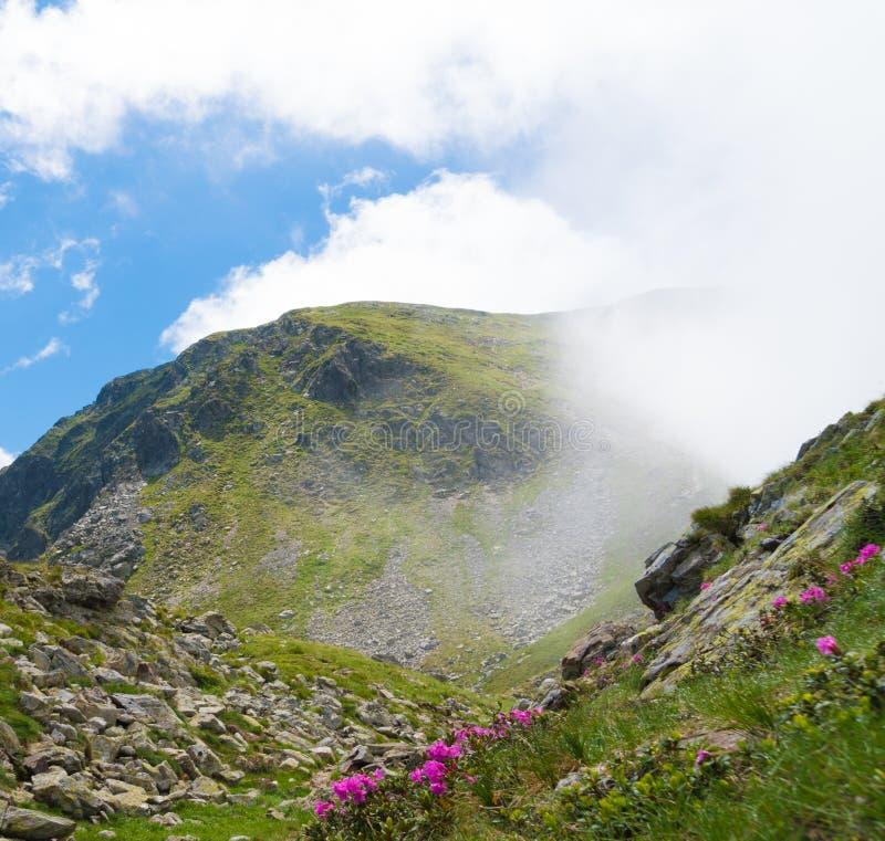De zomerlandschap met rotsachtige bergen en mooie wilde bloemen in de ochtendmist royalty-vrije stock fotografie