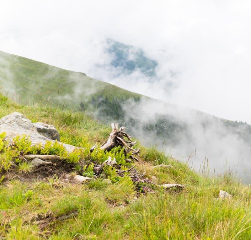 De zomerlandschap met rotsen en een gevallen boom in de ochtendmist stock fotografie