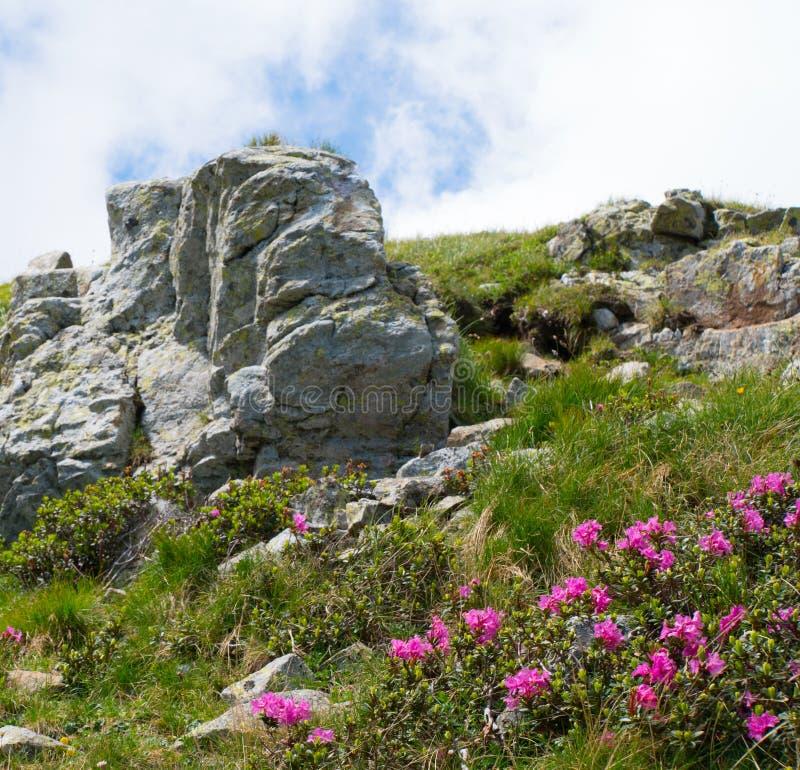 De zomerlandschap met rotsen en mooie wilde bloemen in de ochtendmist royalty-vrije stock foto's