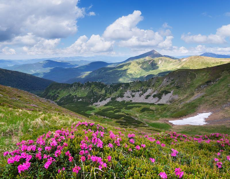 De zomerlandschap met roze bloemen in de bergen royalty-vrije stock fotografie